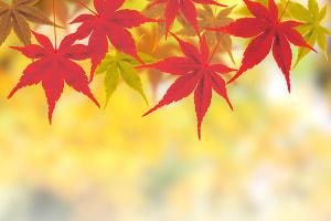 秋の過ごし方で基礎代謝が変わります♪